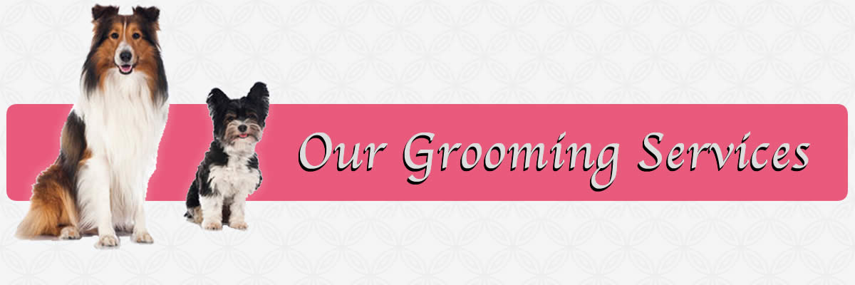 Schedule Dog Grooming near me